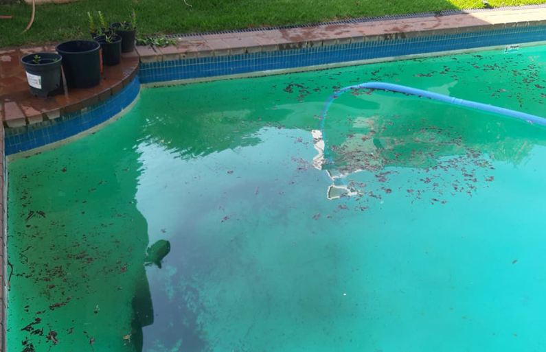 Clean your Pool